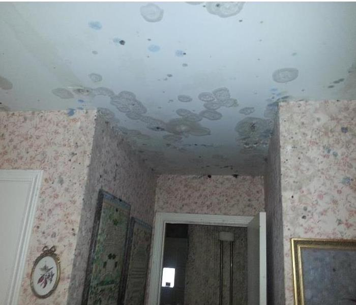 Mold Damage in Rochester, NY