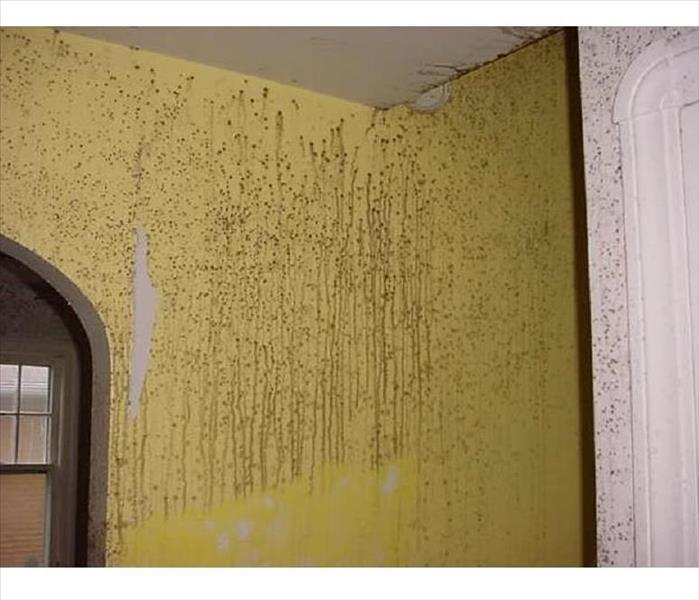 Mold Remediation in Webster, NY