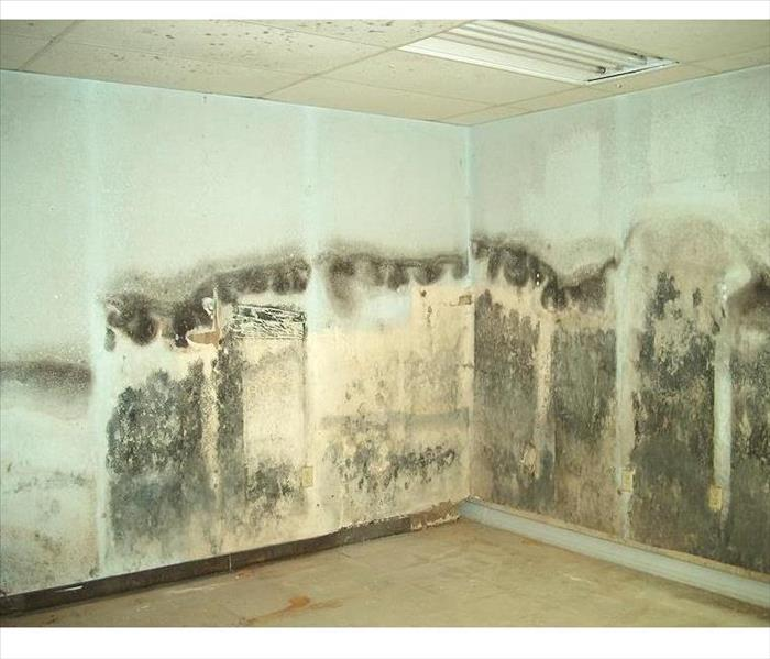 Mold Remediation Got Mold? Give us a call!